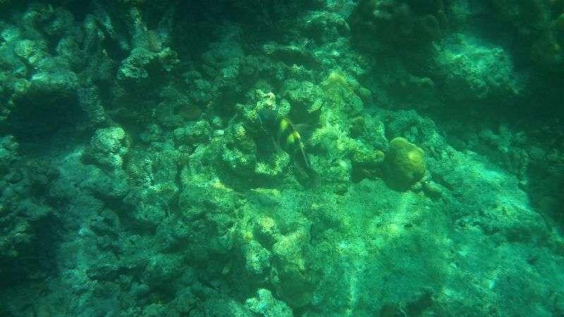 Surin Island 2